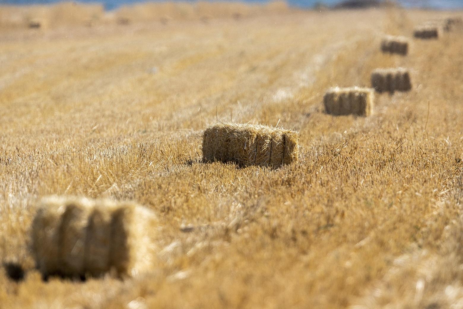 Büyükkılıç'ın Tarıma Verdiği Önem Rakamlara Yansıdı
